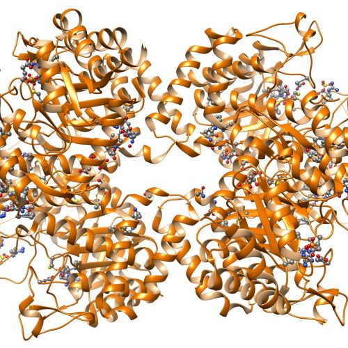 photodune-9664337-protein-structure-l
